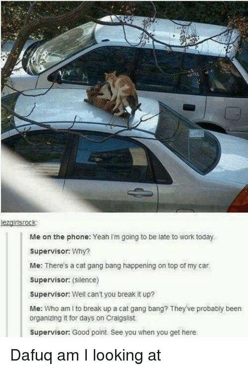 Cat Gang Bang: lezgirlsrock.  I Me on the phone: Yeah I'm going to be late to work today.  Supervisor: Why?  Me: There's a cat gang bang happening on top of my car.  Supervisor: (silence)  Supervisor: Well can't you break it up?  Me: Who am to break up a cat gang bang? They've probably been  organizing it for days on Craigslist.  Supervisor: Good point. See you when you get here. Dafuq am I looking at