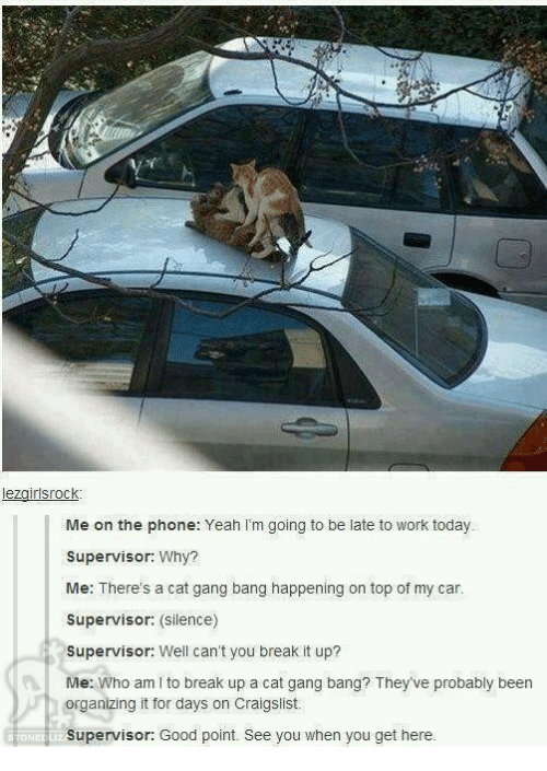 Cat Gang Bang: lezgirlsrock  Me on the phone: Yeah I'm going to be late to work today.  Supervisor: Why?  Me: There's a cat gang bang happening on top of my car.  Supervisor: (Silence)  Supervisor: Well can't you break it up?  Me: Who am I to break up a cat gang bang? They've probably been  organizing it for days on Craigslist.  Supervisor: Good point. See you when you get here.  STONE