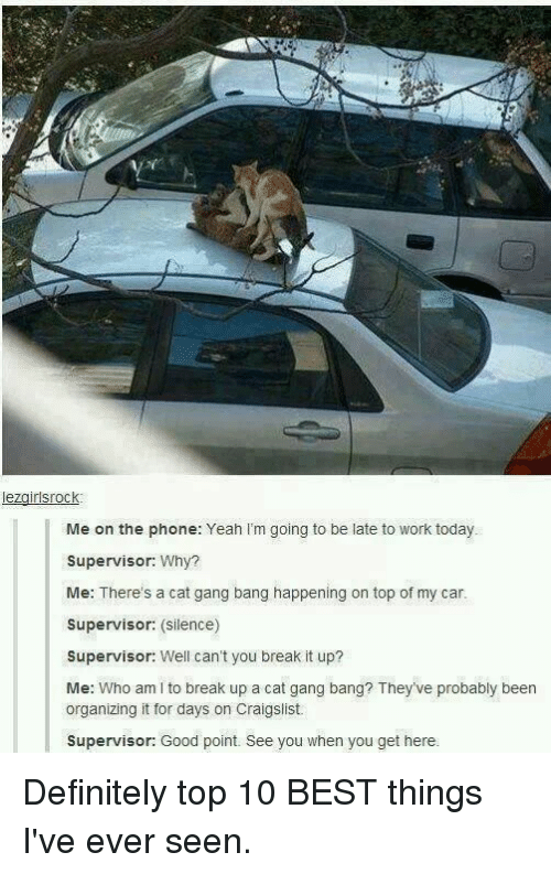 Cat Gang Bang: lezgirlsrock  Me on the phone: Yeah I'm going to be late to work today.  Supervisor: Why?  Me: There's a cat gang bang happening on top of my car.  Supervisor: (silence)  Supervisor: Well can't you break it up?  Me: Who am I to break up a cat gang bang? They've probably been  organizing it for days on Craigslist  Supervisor: Good point. See you when you get here. Definitely top 10 BEST things I've ever seen.