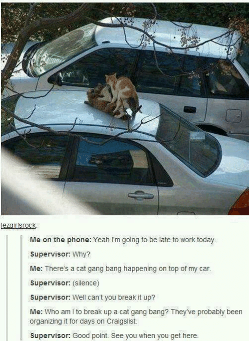 Cat Gang Bang: lezgirlsrock  Me on the phone: Yeah I'm going to be late to work today.  Supervisor: Why?  Me: There's a cat gang bang happening on top of my car.  Supervisor: (Silence)  Supervisor: Well can't you break it up?  Me: Who am I to break up a cat gang bang? They've probably been  organizing it for days on Craigslist.  Supervisor: Good point. See you when you get here.