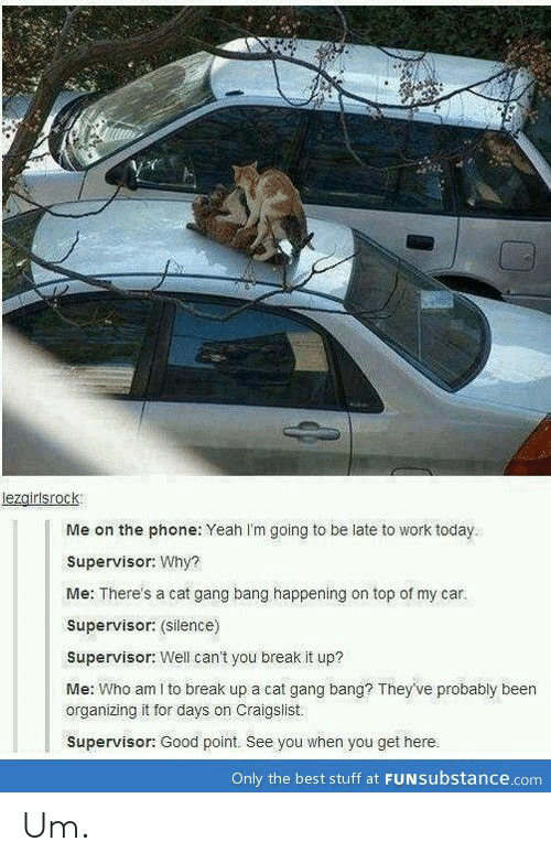 Cat Gang Bang: lezgirlsrock  Me on the phone: Yeah I'm going to be late to work today  Supervisor: Why?  Me: There's a cat gang bang happening on top of my car.  Supervisor: (silence)  Supervisor: Well can't you break it up?  Me: Who am I to break up a cat gang bang? They've probably been  organizing it for days on Craigslist  Supervisor: Good point. See you when you get here.  Only the best stuff at FUNsubstance.com Um.