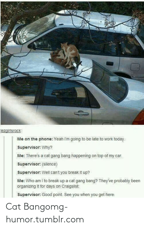Cat Gang Bang: lezgirlsrock:  Me on the phone: Yeah I'm going to be late to work today.  Supervisor: Why?  Me: There's a cat gang bang happening on top of my car.  Supervisor: (silence)  Supervisor: Well can't you break it up?  Me: Who am i to break up a cat gang bang? They've probably been  organizing it for days on Craigslist  Supervisor: Good point. See you when you get here: Cat Bangomg-humor.tumblr.com