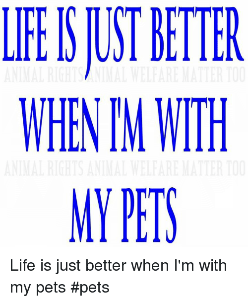 Life, Memes, and Pets: LFEISJUST HTTER  WHEN TM WITH  MY PETS Life is just better when I'm with my pets          #pets
