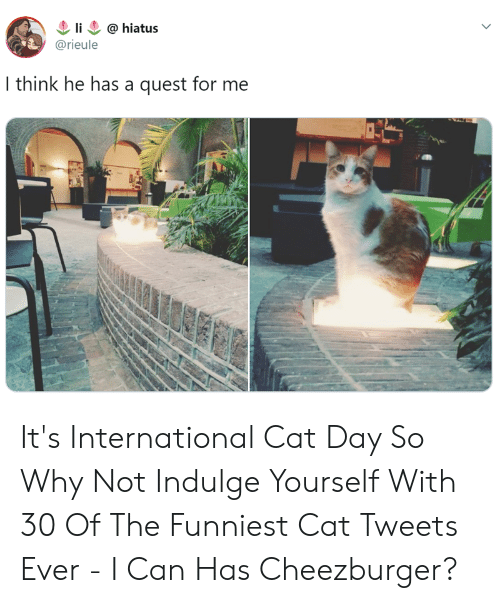 cheezburger: li  @hiatus  @rieule  I think he has a quest for me It's International Cat Day So Why Not Indulge Yourself With 30 Of The Funniest Cat Tweets Ever - I Can Has Cheezburger?