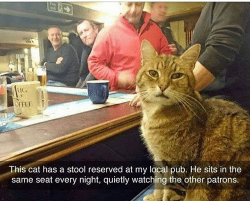 Pub: LIC.  This cat has a stool reserved at my local pub. He sits in the  same seat every night, quietly watching the other patrons.