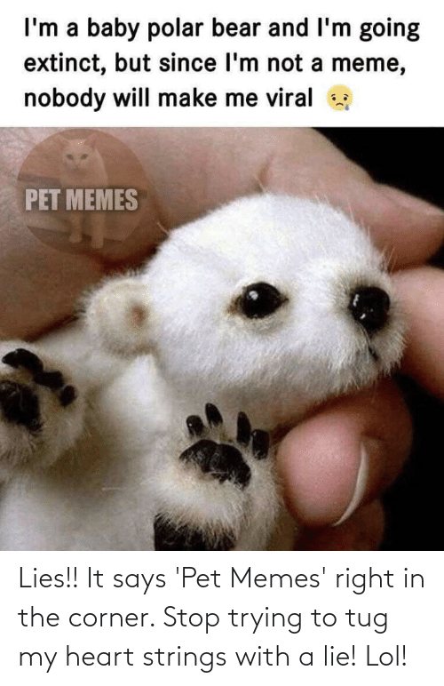 heart strings: Lies!! It says 'Pet Memes' right in the corner. Stop trying to tug my heart strings with a lie! Lol!