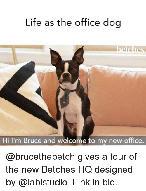 Life, The Office, and Link: Life as the office dog  Hi I'm Bruce and welcome to my new office. @brucethebetch gives a tour of the new Betches HQ designed by @lablstudio! Link in bio.