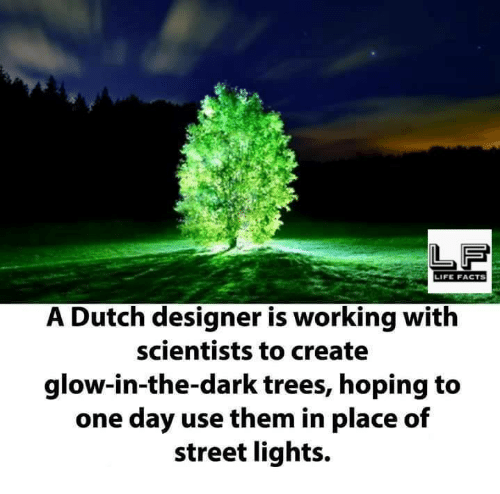 Dutches: LIFE FACTS  A Dutch designer is working with  scientists to create  glow-in-the-dark trees, hoping to  one day use them in place of  street lights.