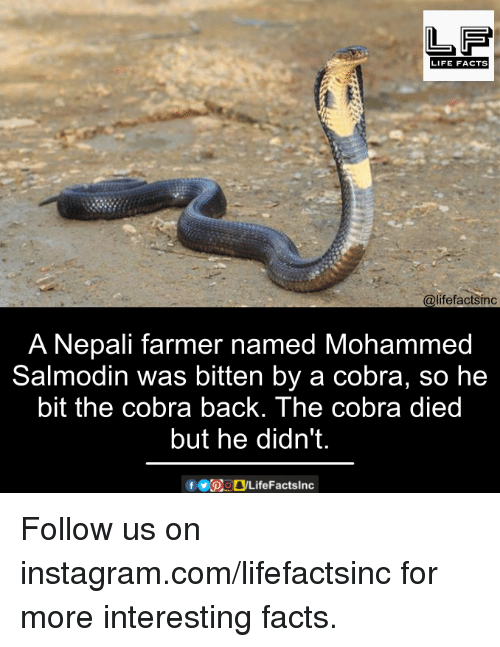 nepali: LIFE FACTS  @lifefactsinc  A Nepali farmer named Mohammed  Salmodin was bitten by a cobra, so he  bit the cobra back. The cobra died  but he didn't. Follow us on instagram.com/lifefactsinc for more interesting facts.
