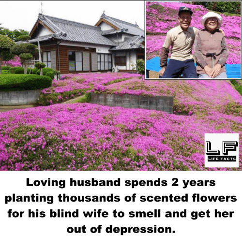 Facts, Life, and Memes: LIFE FACTS  Loving husband spends 2 years  planting thousands of scented flowers  for his blind wife to smell and get her  out of depression.