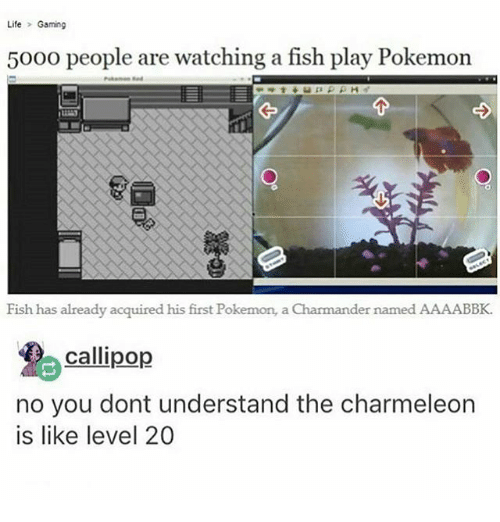 cally: Life  Gaming  5000 people are watching a fish play Pokemon  Fish has already acquired his first Pokemon, a Charmander named AAAABBK.  Calli pop  no you dont understand the charmeleon  is like level 20