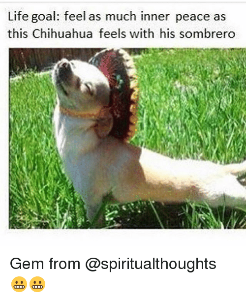 life goal feel as much inner peace as this chihuahua feels with his