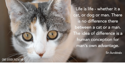 cat-or-dog: Life is life - whether it a  cat, or dog or man. There  is no difference there  between a cat or a man.  The idea of difference is a  human conception for  man's own advantage.  Sri Aurobindo  ONE GreeN PLANET