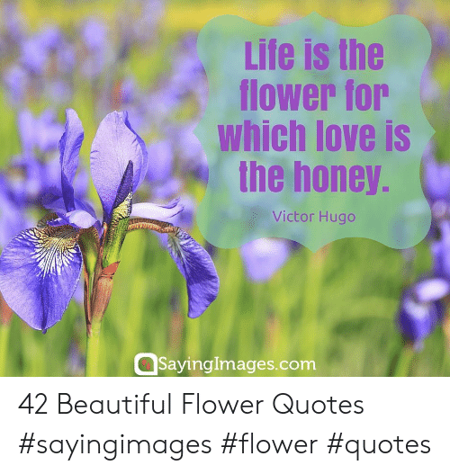 Flower Quotes: Life is the  flower for  which love is  the honey.  Victor Hugo  SayingImages.com 42 Beautiful Flower Quotes #sayingimages #flower #quotes