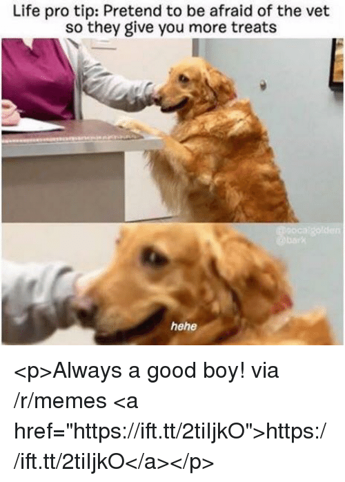 "life-pro-tip: Life pro tip: Pretend to be afraid of the vet  so they give you more treats <p>Always a good boy! via /r/memes <a href=""https://ift.tt/2tiIjkO"">https://ift.tt/2tiIjkO</a></p>"