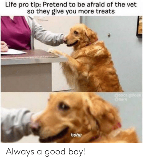 life-pro-tip: Life pro tip: Pretend to be afraid of the vet  so they give you more treats Always a good boy!