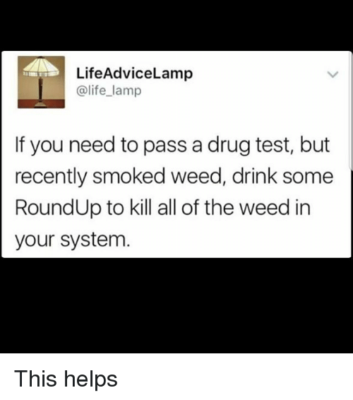 Life, Memes, and Weed: LifeAdviceLamp  @life_lamp  If you need to pass a drug test, but  recently smoked weed, drink some  RoundUp to kill all of the weed in  your system This helps
