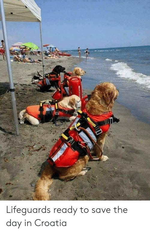 save-the-day: Lifeguards ready to save the day in Croatia