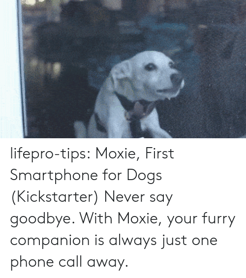 Tinyurl: lifepro-tips:  Moxie, First Smartphone for Dogs (Kickstarter) Never say goodbye. With Moxie, your furry companion is always just one phone call away.
