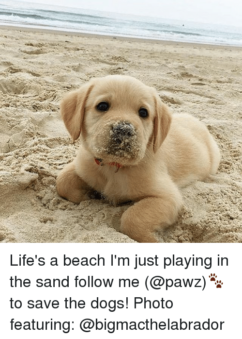 Life S A Beach And I M Playing In The Sand