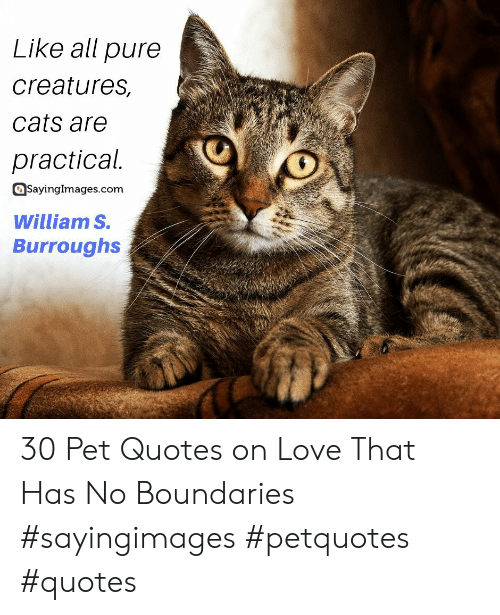 Quotes On Love: Like all pure  creatures,  cats are  practical.  SayingImages.com  William S.  Burroughs 30 Pet Quotes on Love That Has No Boundaries #sayingimages #petquotes #quotes