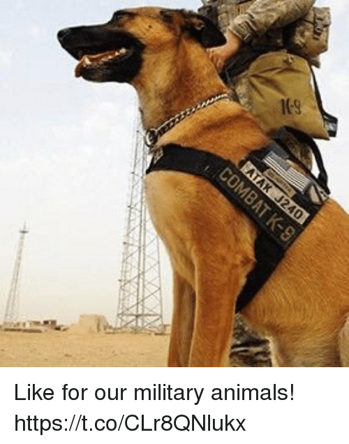 Animals, Memes, and Military: Like for our military animals! https://t.co/CLr8QNlukx