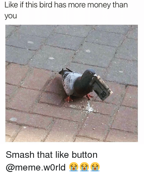Smash That Like Button: Like if this bird has more money than  you Smash that like button @meme.w0rld 😭😭😭
