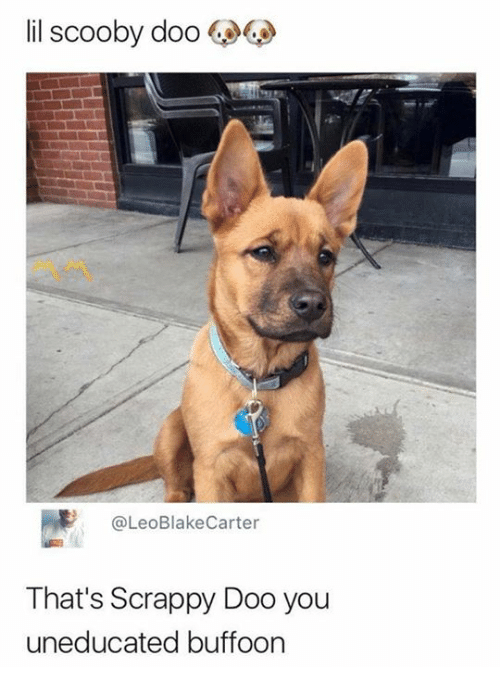 Memes, Scooby Doo, and Scrappy: lil scooby doo  @LeoBlakeCarter  That's Scrappy Doo you  uneducated buffoon