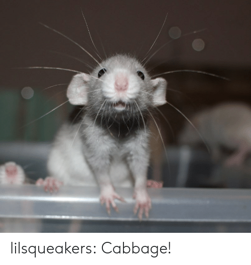 cabbage: lilsqueakers:  Cabbage!