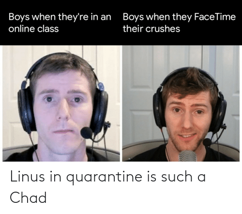 linus: Linus in quarantine is such a Chad