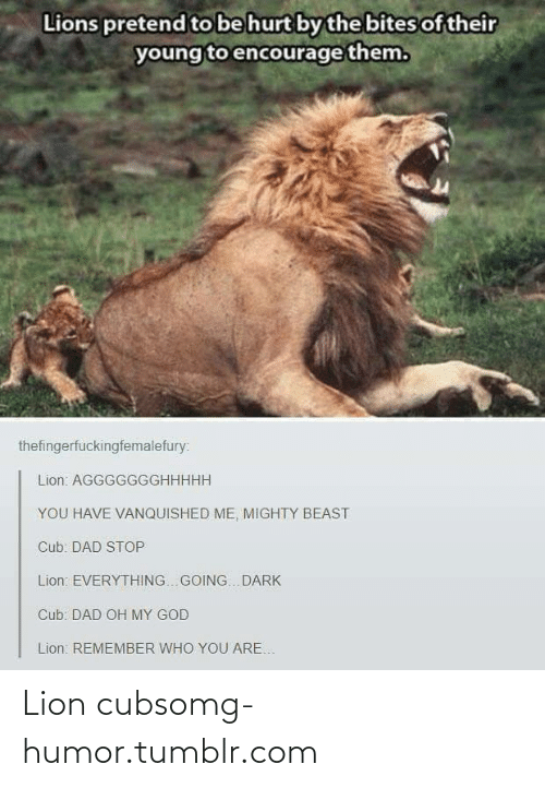 Lions: Lions pretend to be hurt by the bites of their  young to encourage them.  thefingerfuckingfemalefury:  Lion: AGGGGGGGHHHHH  YOU HAVE VANQUISHED ME, MIGHTY BEAST  Cub: DAD STOP  Lion: EVERYTHING.. GOING. DARK  Cub: DAD OH MY GOD  Lion: REMEMBER WHO YOU ARE. Lion cubsomg-humor.tumblr.com