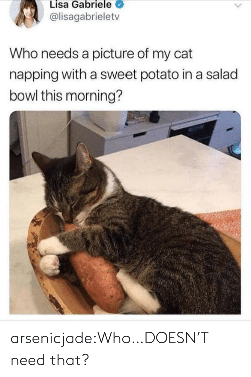 salad: Lisa Gabriele  @lisagabrieletv  Who needs a picture of my cat  napping with a sweet potato in a salad  bowl this morning? arsenicjade:Who…DOESN'T need that?