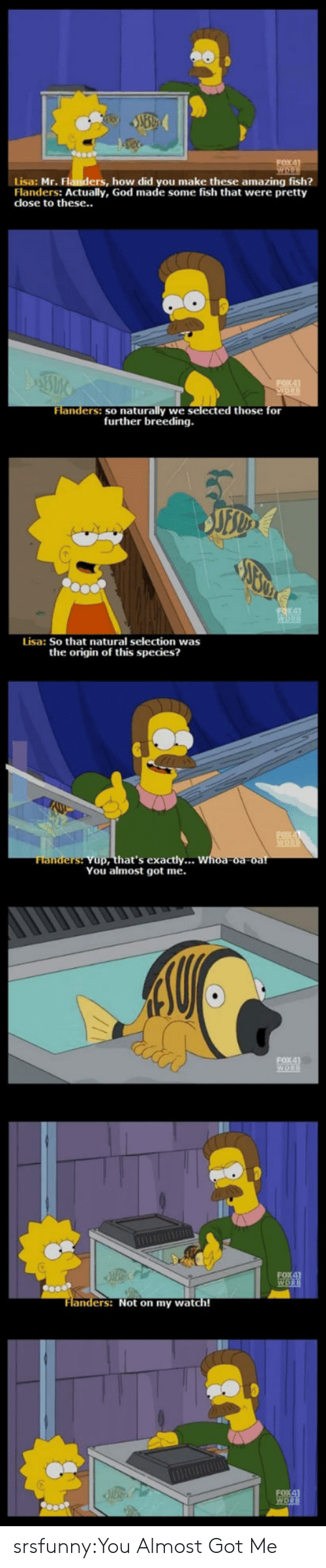 The Origin Of: Lisa: Mr. Flanders, how did you make these amazing fish?  Flanders: Actually, God made some fish that were pretty  dose to these..  naturally we selected those for  further breeding  Flanders: so  Lisa: So that natural selection was  the origin of this species?  hat's exactly...  You almost got me.  ers: Not on my watch! srsfunny:You Almost Got Me