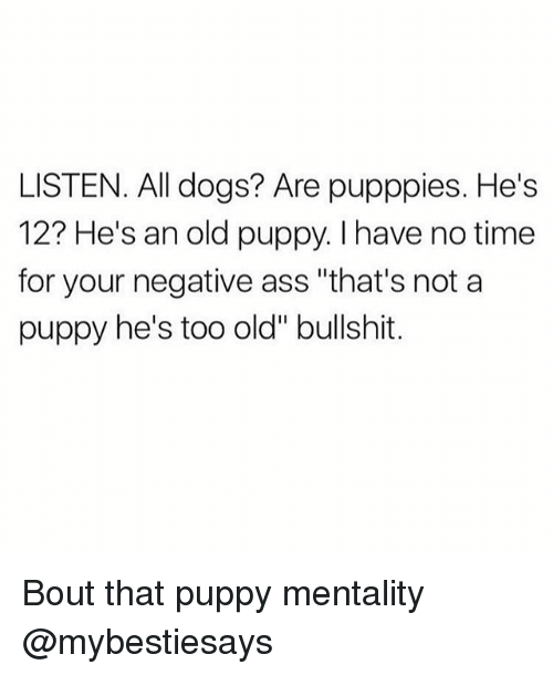 "Ass, Dogs, and Puppy: LISTEN. All dogs? Are pupppies. He's  12? He's an old puppy. I have no time  for your negative ass ""that's not a  puppy he's too old"" bullshit. Bout that puppy mentality @mybestiesays"