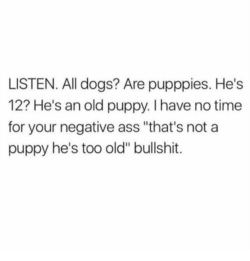 """all dogs: LISTEN. All dogs? Are pupppies. He's  12? He's an old puppy. I have no time  for your negative ass """"that's not a  puppy he's too old"""" bullshit."""