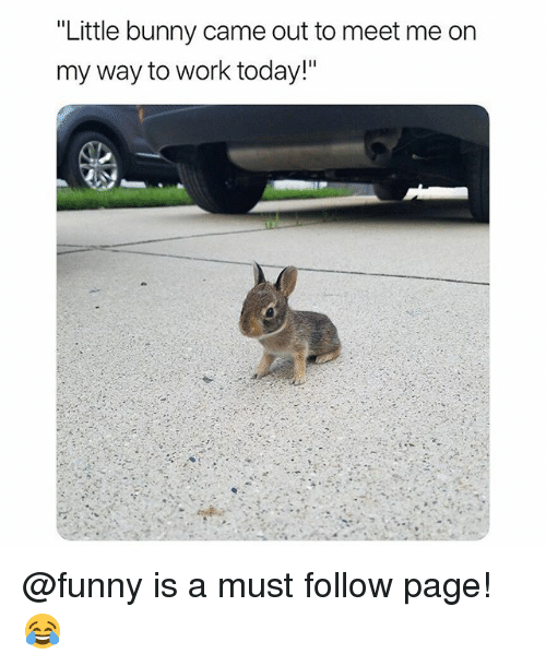 "Funny, Work, and Today: ""Little bunny came out to meet me on  my way to work today!"" @funny is a must follow page! 😂"
