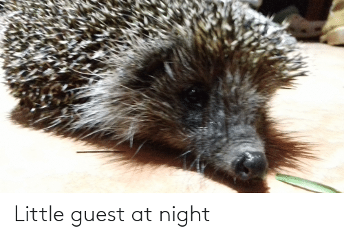 Guest: Little guest at night