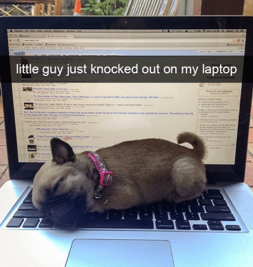 knocked out: little guy just knocked out on my laptop