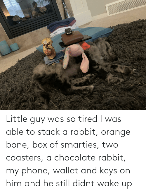 keys: Little guy was so tired I was able to stack a rabbit, orange bone, box of smarties, two coasters, a chocolate rabbit, my phone, wallet and keys on him and he still didnt wake up