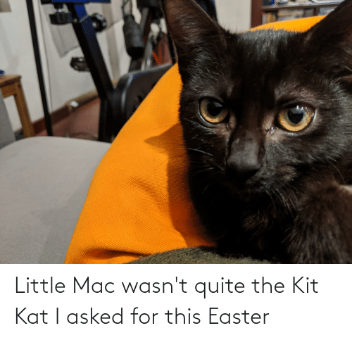 kat: Little Mac wasn't quite the Kit Kat I asked for this Easter