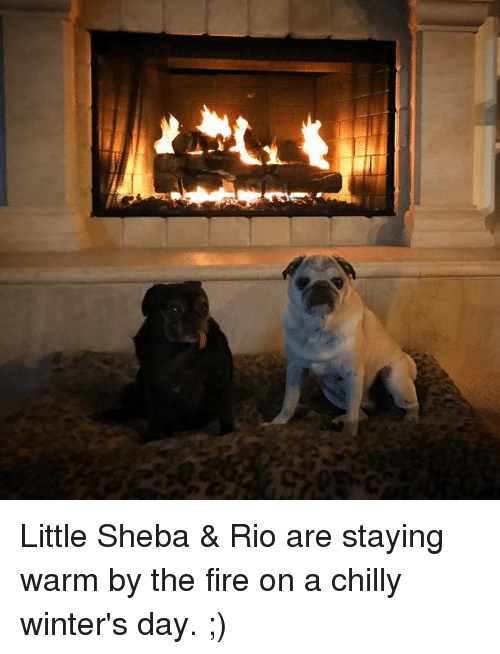 Chillys: Little Sheba & Rio are staying warm by the fire on a chilly winter's day. ;)
