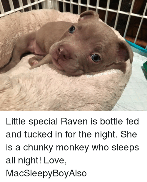 ravenous: Little special Raven is bottle fed and tucked in for the night. She is a chunky monkey who sleeps all night!   Love, MacSleepyBoyAlso