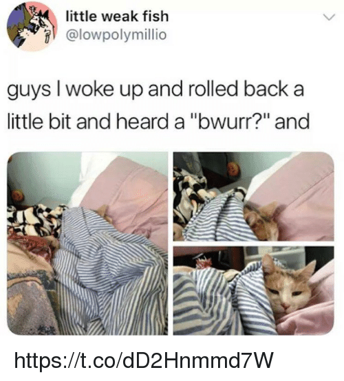 "Memes, Fish, and Back: little weak fish  @lowpolymillio  guys I woke up and rolled back a  little bit and heard a ""bwurr?"" and https://t.co/dD2Hnmmd7W"