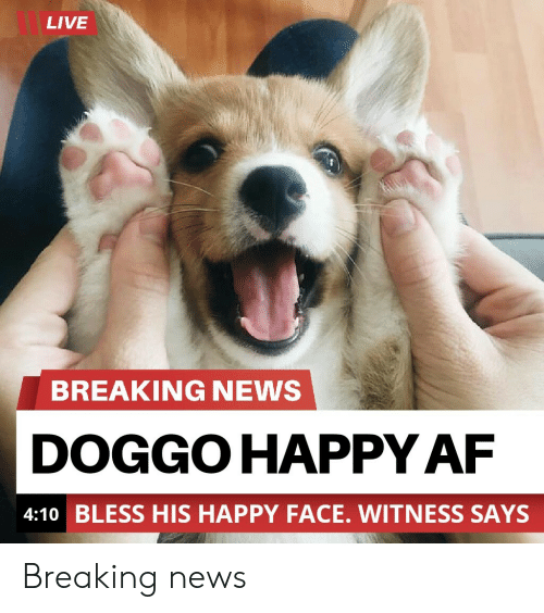 happy face: LIVE  BREAKING NEWS  DOGGO HAPPY AF  4:10 BLESS HIS HAPPY FACE. WITNESS SAYS Breaking news