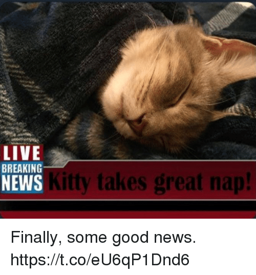 Memes, News, and Breaking News: LIVE  BREAKING  NEWS  Kitty takes great nap! Finally, some good news. https://t.co/eU6qP1Dnd6