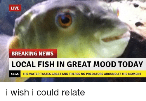 Funny: LIVE  BREAKING NEWS  LOCAL FISH IN GREAT MOOD TODAY  THE WATER TASTES GREAT AND THERES NO PREDATORS AROUND ATTHE MOMENT  19:41 i wish i could relate