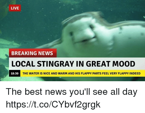 Greates: LIVE  BREAKING NEWS  LOCAL STINGRAY IN GREAT MOOD  18:30  THE WATER IS NICE AND WARM AND HIS FLAPPY PARTS FEEL VERY FLAPPY INDEED The best news you'll see all day https://t.co/CYbvf2grgk