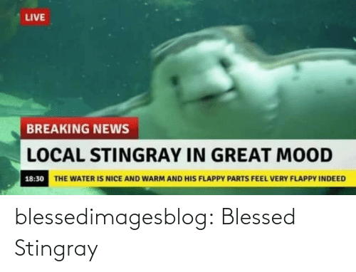 Is Nice: LIVE  BREAKING NEWS  LOCAL STINGRAY IN GREAT MOOD  18:30 THE WATER IS NICE AND WARM AND HIS FLAPPY PARTS FEEL VERY FLAPPY INDEED blessedimagesblog:  Blessed Stingray
