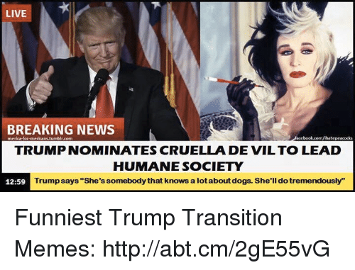 """Funniest Trump: LIVE  BREAKING NEWS  merica for mericani.tum  blr.com  lihatepeacocks  TRUMP NOMINATES CRUELLA DE VIL TO LEAD  HUMANE SOCIETY  Trump says """"She's somebodythat knows a lotaboutdogs. She'll dotremendously""""  12:59 Funniest Trump Transition Memes: http://abt.cm/2gE55vG"""