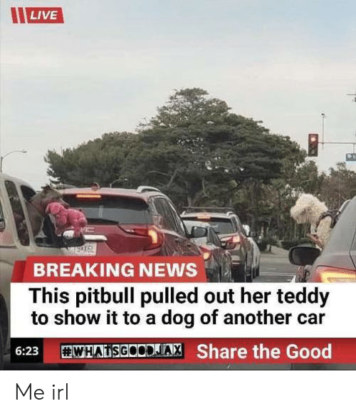 Pitbull: LIVE  BREAKING NEWS  This pitbull pulled out her teddy  to show it to a dog of another car  WHADSGOODJA, Share the Good  6:23 Me irl